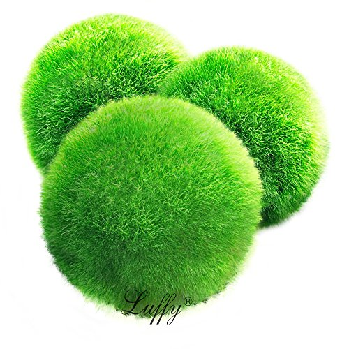 4-luffy-marimo-moss-balls-aesthetically-beautiful-create-healthy-environment-eco-friendly-low-mainte