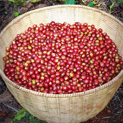 (5 lbs) Decaf Sumatra Mandheling Green Unroasted Coffee Beans - Specialty Grade Arabica Raw Coffee - 5 lb Bulk Bag Size - Shade Grown by Bodhi Leaf Trading Company (Image #5)