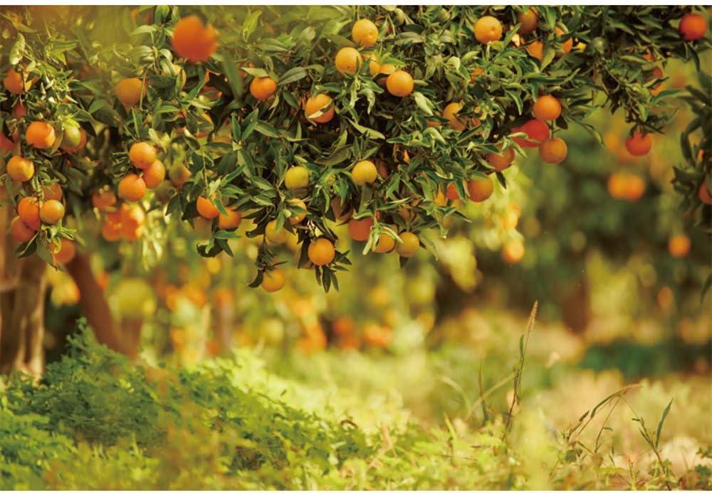 YEELE Spring Backdrop 10x8ft Fruit Trees Natural Outdoor Garden Party Photography Background Spring Photos Wedding Photo Booth Backdrop Video Drape Digital Wallpaper