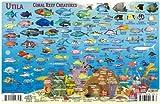 Utila Honduras Dive Map & Reef Creatures Guide