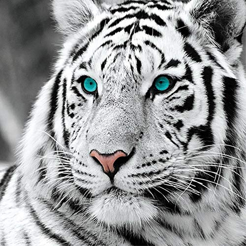 DIY 5D Diamond Painting Kit for Adults, NYEBS DIY Diamond Painting Animal Full Round Drill White Tiger Rhinestone Embroidery Arts Craft Supply for Wall Decoration 12X12 inches (Full Drill) ()