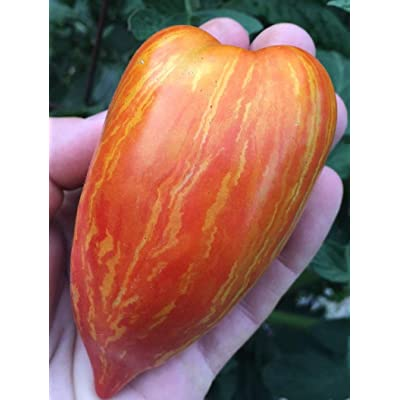 Temura Striped (Speckled) Roman Heirloom Tomato Premium Seed Packet : Garden & Outdoor