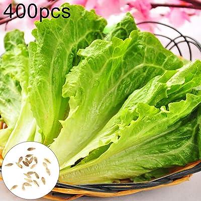 BLagenertJ Lettuce Seeds Green Plant Nutritious Edible Vegetable Plant Seeds - 400 Pcs 400 Pcs : Garden & Outdoor