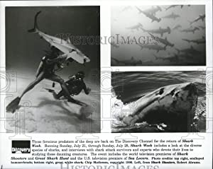 Historic Images - 1991 Press Photo Scalloped Hammerhead, Great White Sharks Featured in Shark Week