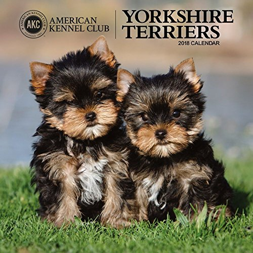 American Kennel Club Yorkshire Terriers 2018 Wall Calendar (Club Terrier)