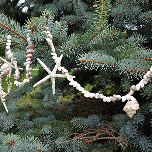 (Beachy Nautical Decor 8FT Umbonium Seashell and White Starfish Garland)