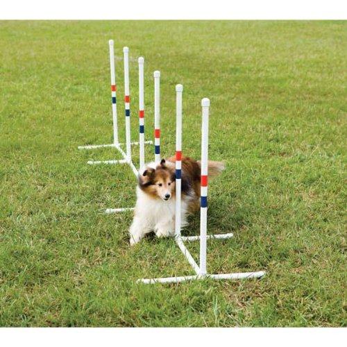 Amazon.com : PetSafe Agility Weave Poles : PetSafe : Pet Agility Products :  Pet Supplies