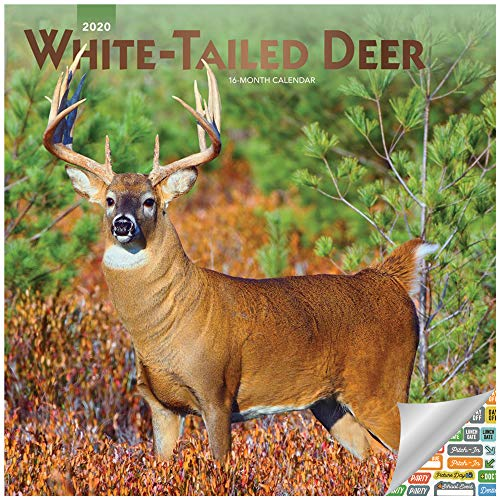 White Tailed Deer Calendar 2020 Set - Deluxe 2020 White-Tailed Deer Wall Calendar with Over 100 Calendar Stickers (White Tailed Deer and Bucks Gifts, Office Supplies) (Mule Calendar)