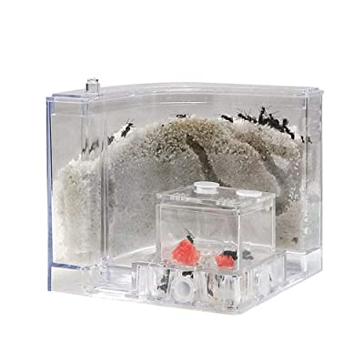Ant Farm Castle,Natural Insect Ecology Box Sand Nest Breeding Cage Kids Toy Plastic Ant House Set for Study Ants Within The 3D Maze(No Pipe): Home & Kitchen