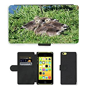 Super Stella Cell Phone Card Slot PU Leather Wallet Case // M00107302 Canada Geese Branta Canadensis // Apple iPhone 5C