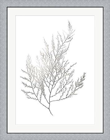 Silver foil algae ii metallic foil by jennifer goldberger framed art print wall picture