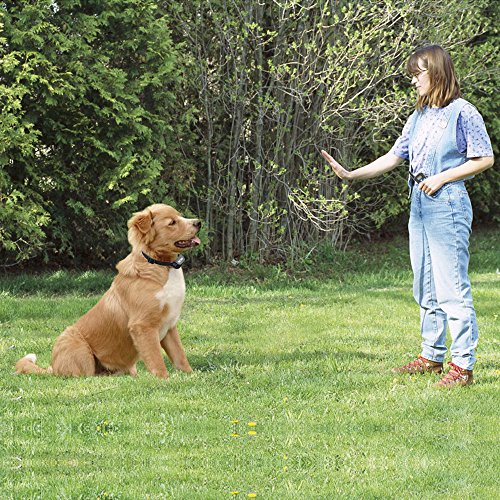 Petrainer-PET998DRB1-Dog-Training-Collar-Rechargeable-and-Rainproof-330-yd-Remote-Dog-Shock-Collar-with-Beep-Vibra-and-Shock-Electronic-Collar
