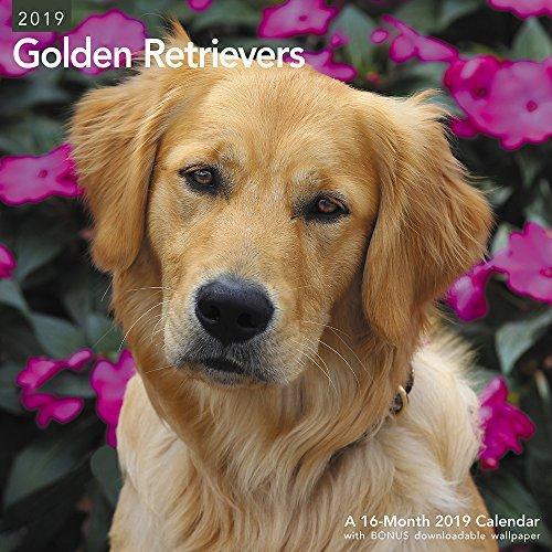 Golden Retrievers Wall Calendar (2019)
