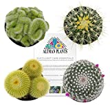 Altman Plants Assorted Live Cactus Collection mini for planters or gifts, 2.5'', 4 Pack
