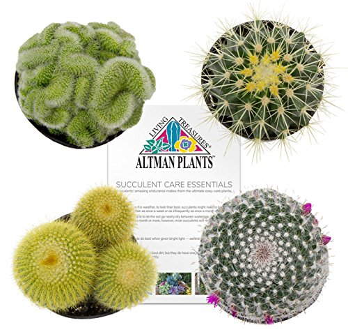 (Altman Plants Assorted Live Cactus Collection mini for planters or gifts, 2.5