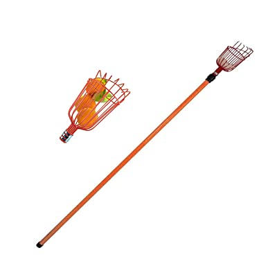Metal Fruit Picker with Telescoping Metal 8 Foot Pole & Fruit Catcher - Reach Fruit up to 15ft Without Ladder : Garden & Outdoor