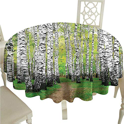 Fabric Tablecloths for KitchenNature,Pathway in The Birch Grove,for Accent ()