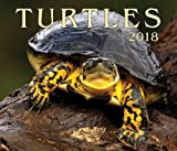 Turtles 2018