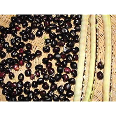 Black Crowder Pea Seeds (50 Seeds) : Garden & Outdoor