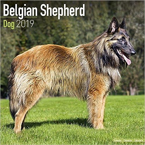 Belgian Shepherd Calendar 2019