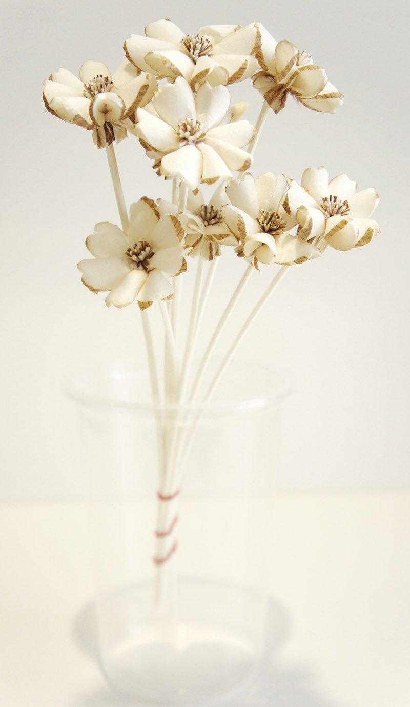 Exotic Elegance Set of 10 Plumeria Design Sola Flower for Aroma Diffuser Diameter 1 1/2 Exotic Aroma