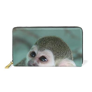 amazon com animal monkey squirrel adorable little pet cute wild