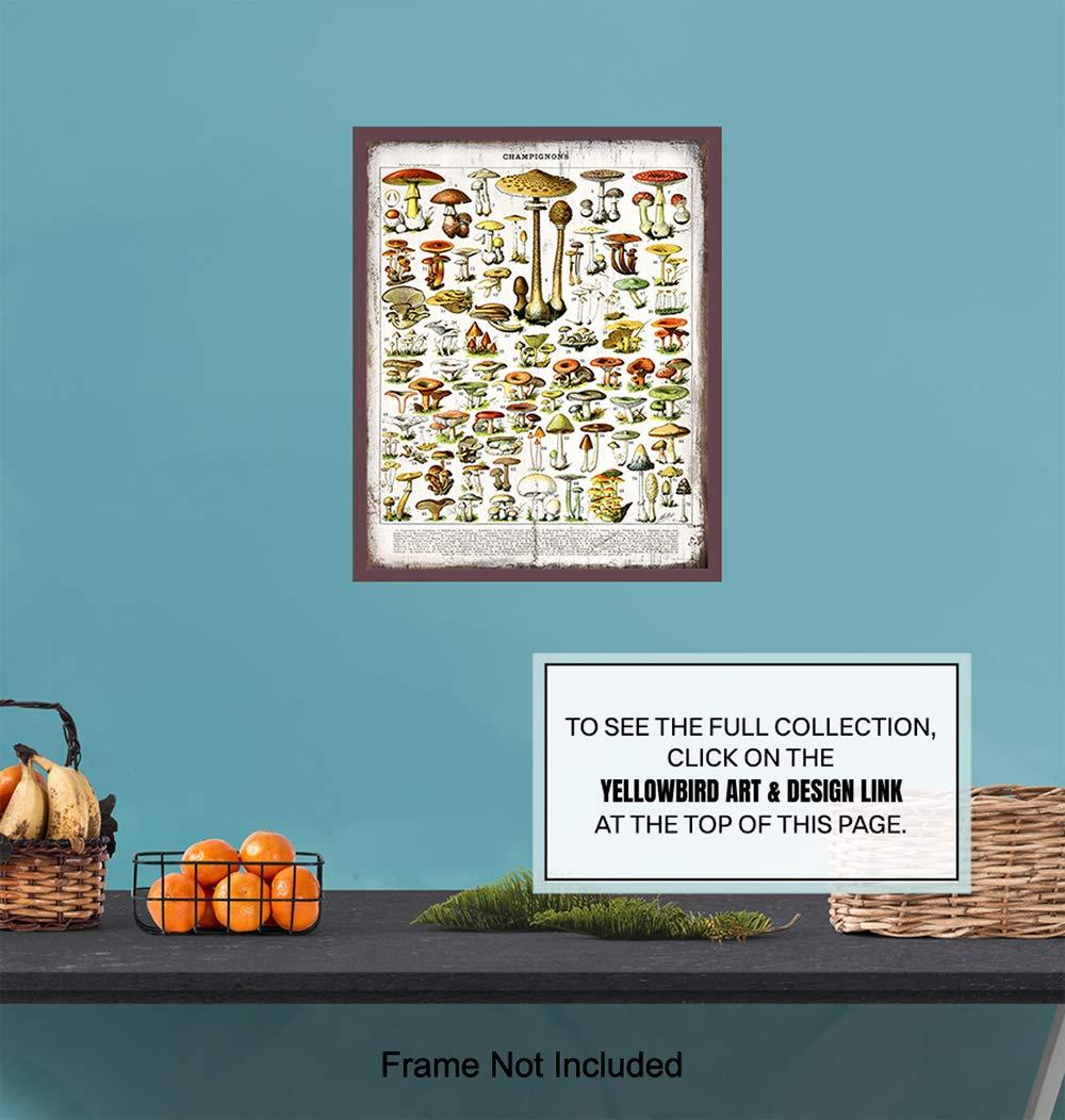 Larousse Gastronomique Wood Sign Photo Wall Art for Cafe Dining Room Unique Housewarming Gift -8x10 Boho Farmhouse Style Restaurant Rustic Vintage Botanical Mushrooms Chart Kitchen Decor