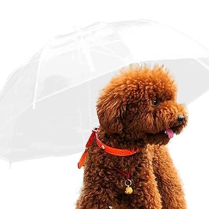 cosanter transparente perro paraguas cuerda de cadena de enlace con perro impermeable