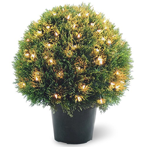 National Tree 24 Inch Cedar Pine Topiary with 100 Clear Lights in Round Green Growers Pot (LCPT4-304-24) (Pine Pot Artificial)
