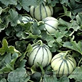 TopOne Sales Rare Small Heirloom True French Charentais Gourmet Melon Cucumis Melo Seeds, Professional Pack, 20 Seeds / Pack, Tasty Melon