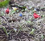 Jeremie Fairy Garden Set of 6 Assorted Tiny Bird Picks