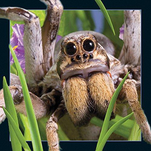 4d Spider - 9