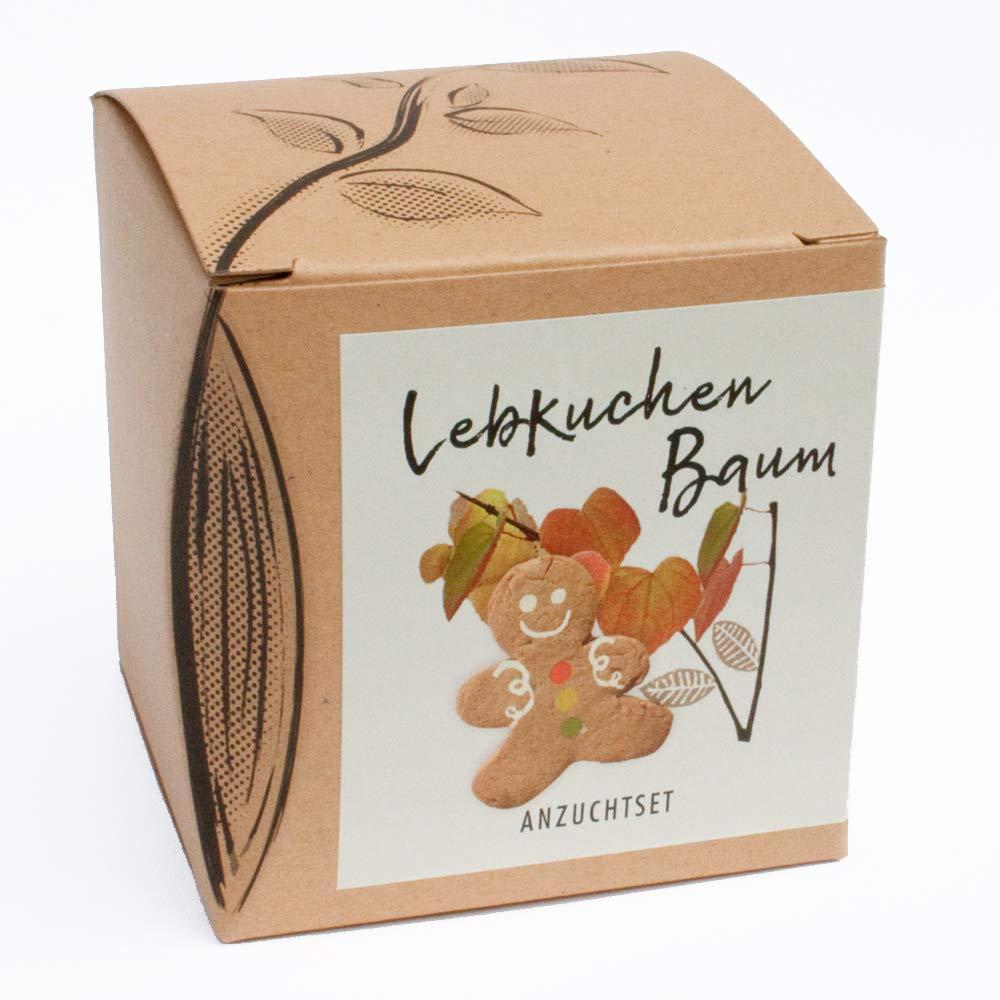 Geschenk-Anzuchtset Lebkuchenbaum Naturkraftwerk e. U.