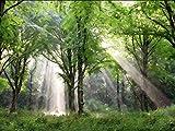 "Light Descending 12""x 16"" Canvas Giclee - Mormon LDS Art"