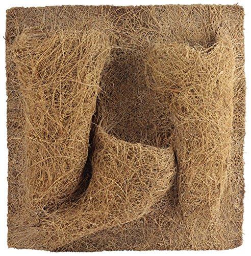 REPTILES PLANET Décor de fond en coco pour terrarium pour planter 30 X 30 X 1 cm REPU5