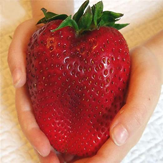 Lonlier Semillas de Fresas Gigantes 50 pcs para Jardín Huerto ...