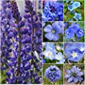 "Bulk Package of 30,000 Seeds, Wildflower Mixture""Dazzling Blue"" (99% Pure Seed - 9 Species) Seeds by Seed Needs"