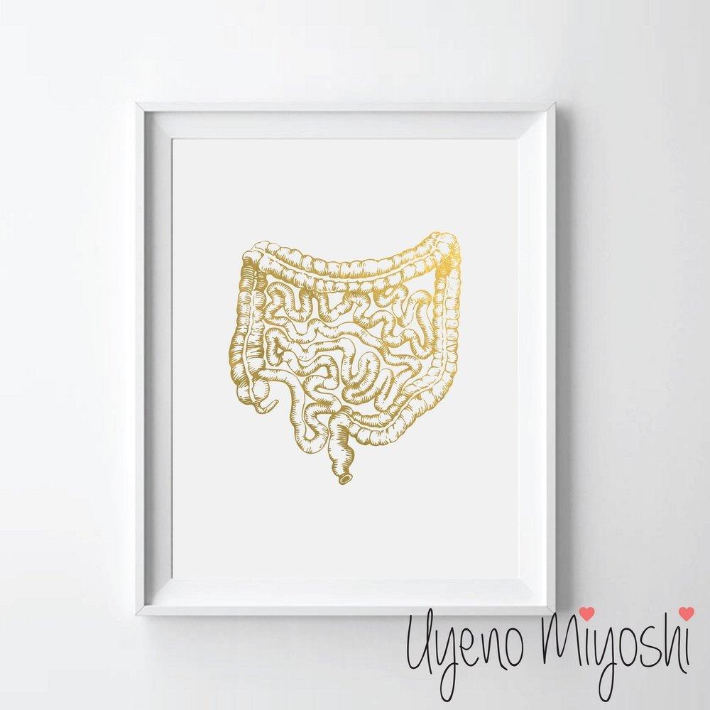 Amazon Human Gi Tract Gold Foil Art Print Human Gi Anatomy Gold