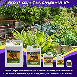 Trifecta Crop Control Super Concentrate-All-in-ONE Natural Pesticide, Fungicide, Miticide, Eliminate Spider Mites, Powdery Mildew, Botrytis and More. Super-Concentrated Non-Toxic Formula (2.5 Gallon)