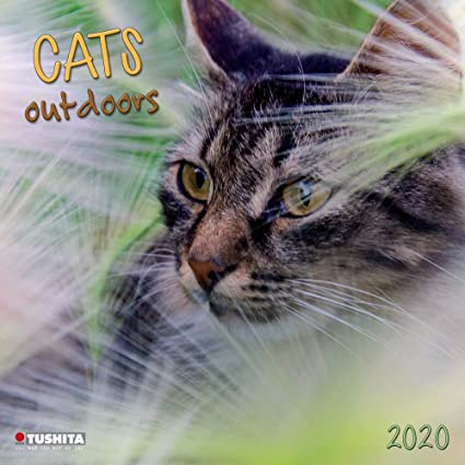 Calendrier Chat 2020.Calendrier 2020 Chat Nature Chat Gouttiere Chat Jardin