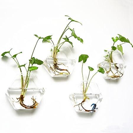 2 vasi in vetro trasparente da appendere a parete per fiori e piante forma esagonale Mkouo