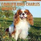 Cavalier King Charles Spaniels - 2017 Calendar 12 x 12in