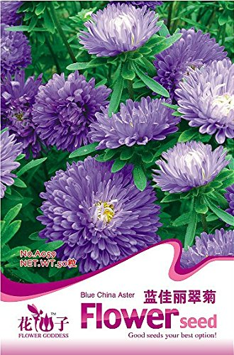 (1 Original Pack, 50 Seeds/Pack, Callistephus chinensis China Aster Duchess Blue Ice Annual Seeds #A059)