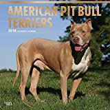 American Pit Bull Terriers 2018 12 x 12 Inch Monthly Square Wall Calendar with Foil Stamped Cover, Animals Dog Breeds (English, French and Spanish Edition)