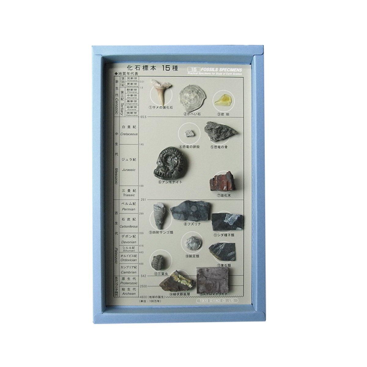 15 species fossil specimen (japan import) Tokyo Science