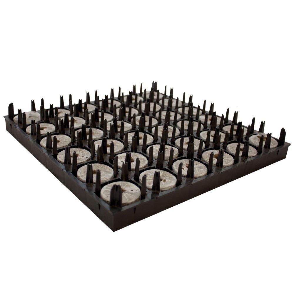 Jiffy 12-580-015 Torfpellets pro Luftbeschnittkasten eine Box enthält 10 Kästen, 7 Large, 50 x 95 mm, 36 Stück