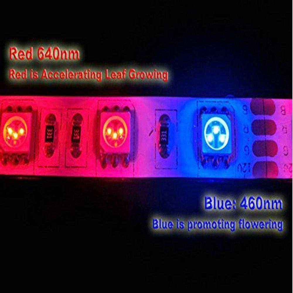 1 corde sallume pour laquarium serre Tesfish Plante LED /él/èvent la lumi/ère de bande DC 12V IP65 plein spectre SMD 5050 Rouge bleu 8