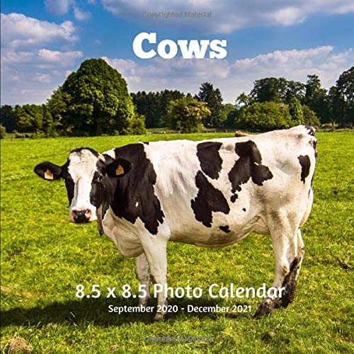Images of 2021 Cow Calendar September