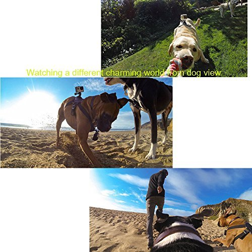 Pet Dog New Fetch Harness Adjustable Chest Strap Belt Mount For Camera Gopro Hero 5 4 3+ 3 2 SJ4000 SJ5000 SJ6000 SJ7000 Sports Camera Accessories