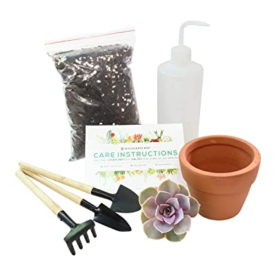 Beginner Kit - 4 inch Plant (Wood) : Garden & Outdoor